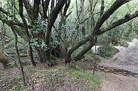 SELVA EN GALERIA, PARQUE NACIONAL EL PALMAR, PROV. DE ENTRE RIOS, ARGENTINA