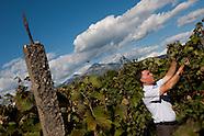 Albania - I vino Kallmet