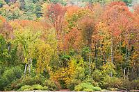Fall Color Along Echo Lake, Charleston, Vermont