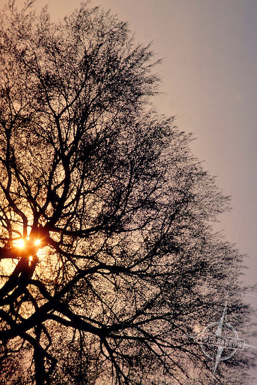 Sunlight through branches.