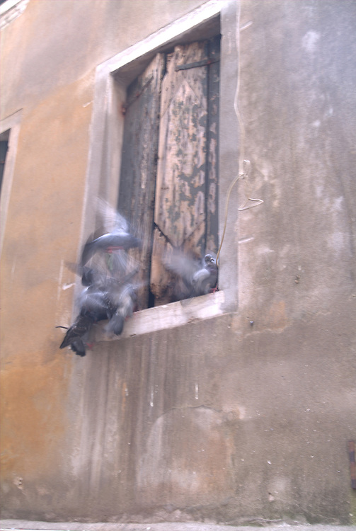 Pigeons flocking at window in Florence, Italy