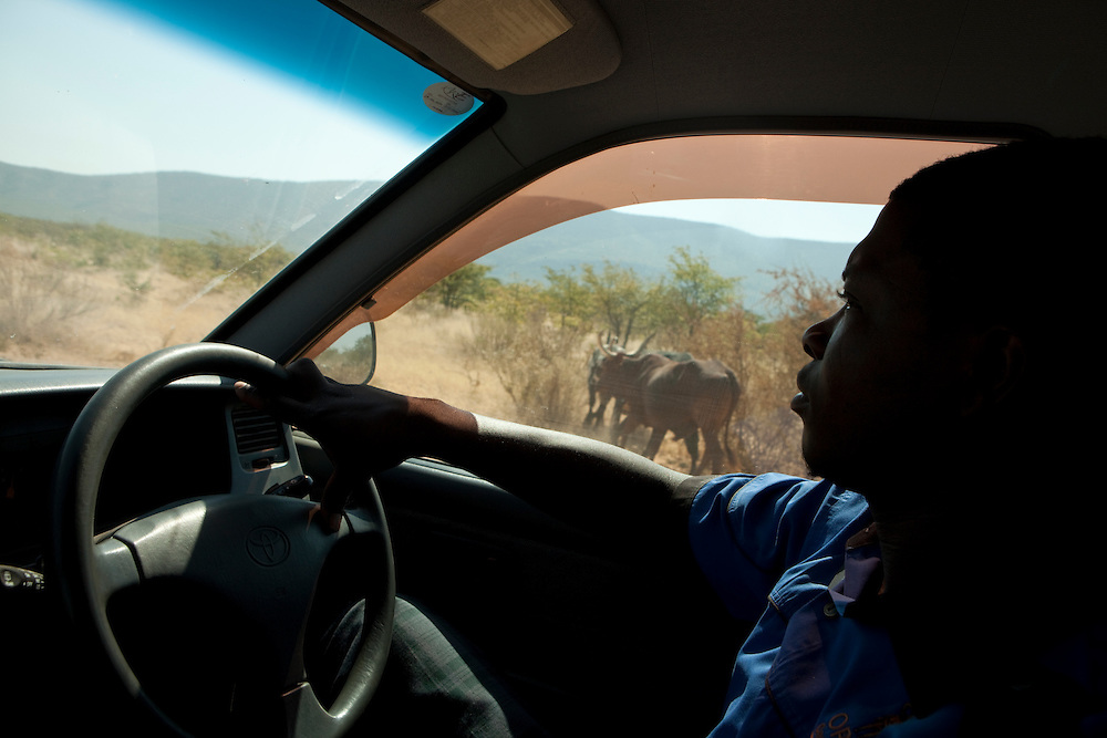 A Herero driver on his car on a road in Namibia, Africa.