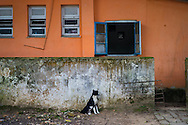 A black and white dog keeps watch in Dois Rios on the island of Ilha Grande, Brazil. Photo by Andrew Tobin/Tobinators Ltd