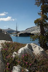 """""""Wildflowers at Lake Aloha 2"""" - These pink wildflowers were photographed at Lake Aloha in the Tahoe Desolation Wilderness."""