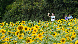 © Licensed to London News Pictures. 20/08/2019. ST ALBANS, UK.  A woman takes a photo of sunflowers on a dry day at Pop-Up Farm, a family run and family friendly farm that welcomes thousands of visitors each year at a series of pop-up farming festivals.  The forecast is for the temperatures to warm up ahead of the August Bank Holiday Weekend. Pop-Up Farm is the vision of Ian and Gillian Pigott who are passionate about farming, education and the environment. The Pigott family have been farming in Hertfordshire for many generations.  Photo credit: Stephen Chung/LNP