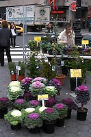 Cabbage and other shrub plants for sale on Union Square Manhattan New York