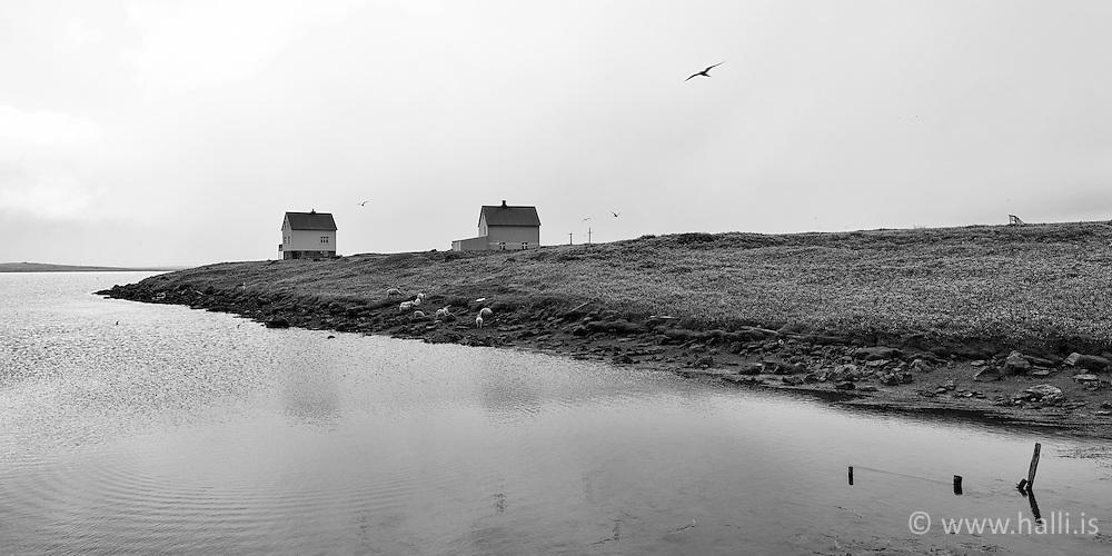 Birds and small houses in a fog in Melrakkasletta, Iceland - Lítil hús og fuglar á Melrakkasléttu