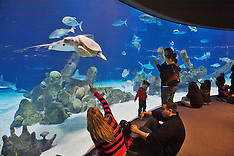 Albuquerque BioPark - Aquarium - photos