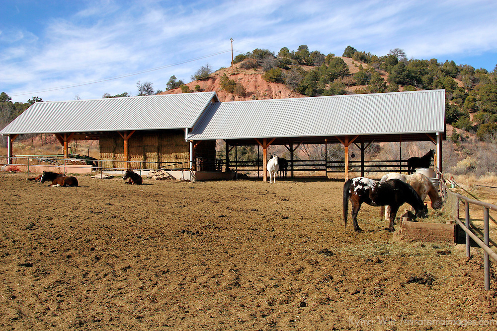 North America, USA, New Mexico. Horses at riding stables of Bishop's Lodge Resort near Santa Fe, New Mexico.