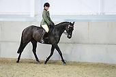 Class 24 - Riding Horse