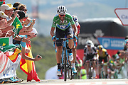 Alejandro Valverde (ESP, Movistar) during the 73th Edition of the 2018 Tour of Spain, Vuelta Espana 2018, Stage 13 cycling race, Candas Carreno - La Camperona 174,8 km on September 7, 2018 in Spain - Photo Luca Bettini / BettiniPhoto / ProSportsImages / DPPI