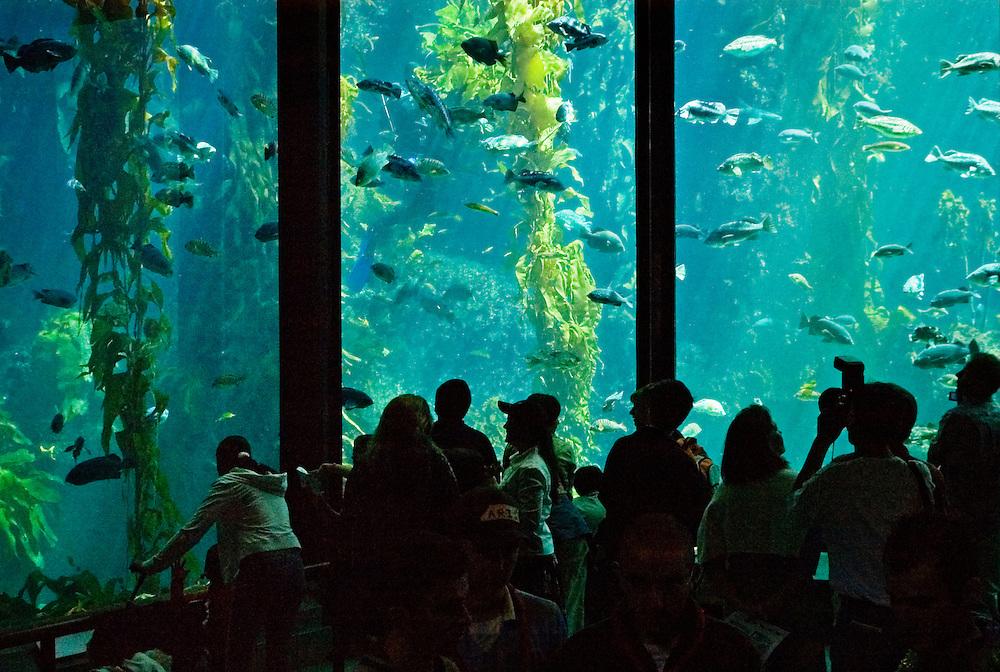 Monterey Bay Aquarium: visitors viewing three-story high fish tank; Monterey, California.