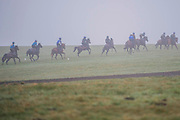 Race horses from Micky Hammond racing and other stables train in mist and drizzle on the gallops above Middleham, Yorkshire.