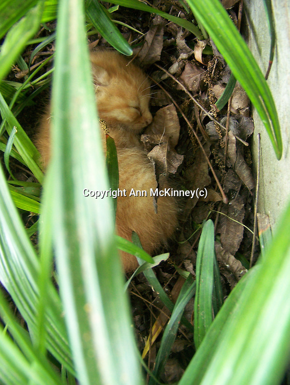 Baby kitten hidden in grass.