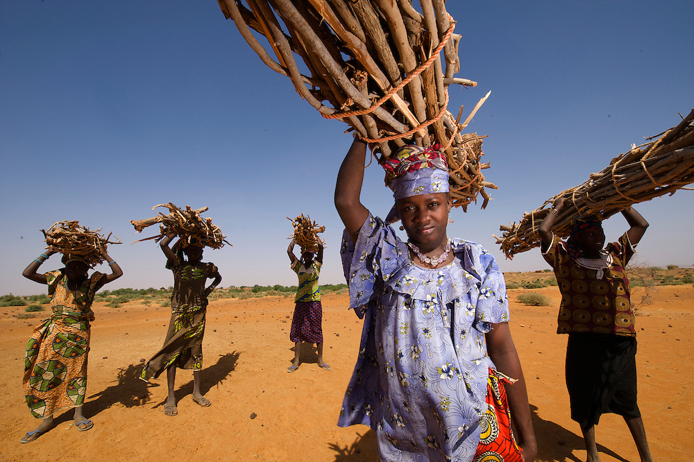Hauling Firewood in the villages around Keita, Niger .