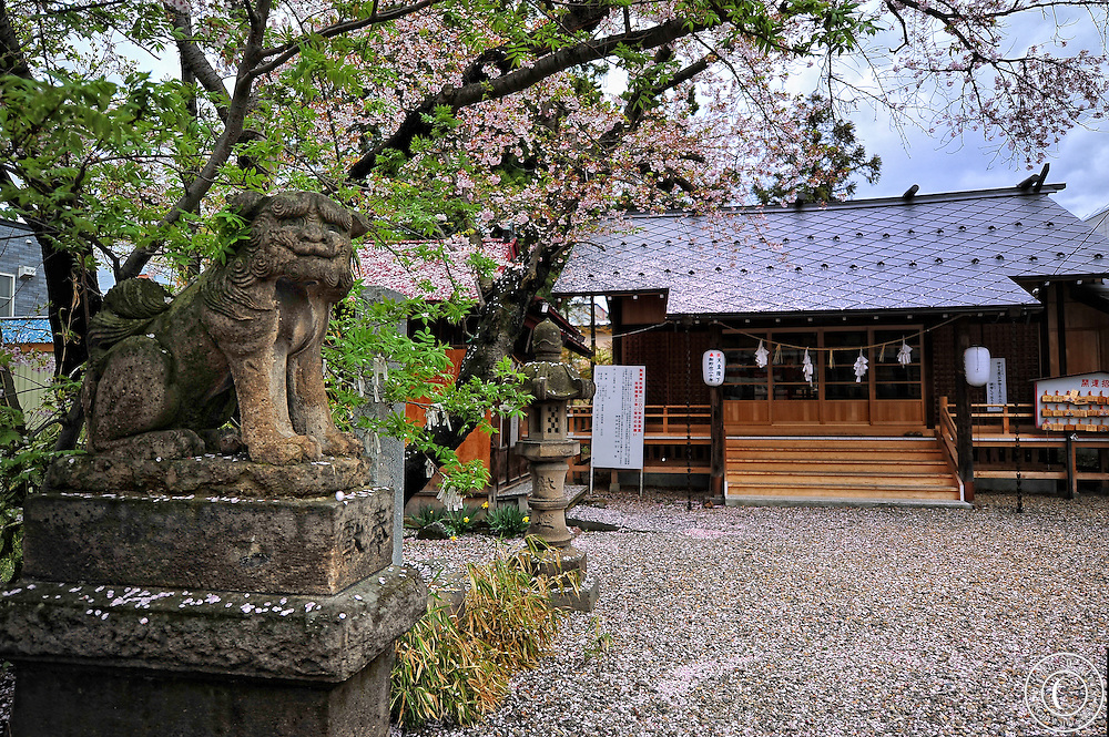 A shinto shrine in Hirosaki Japan. It is the end of the cherry blossoms and the ground and roof are covered with the fallen blossoms.