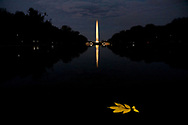 0690 Washington Monument and the Yellow Leaf