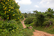Flowers and road in Chorro de Maita, Holguin, Cuba.