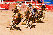1 AUGUST 2007 -- PHOENIX, AZ: Managanas a caballo in which a charro on horseback has three tries to rope a wild mare by its front legs at the Congreso y Campeonato Nacional Charro in Phoenix, AZ, Friday, August 31. The event is the US championship for the Mexican Federacion Mexicana de Charreria. The winners of the US championship go on to compete in the Mexican Charreada championships in Morelia, Michoacan, Mexico in October. Charreadas are Mexican style rodeos that are popular in Mexican communities throughout the US. As the Mexican immigrant community has expanded throughout the US, the sport has expanded with it. Charreadas are now held as far north as Minnesota and along the US - Mexico border.   Photo by Jack Kurtz