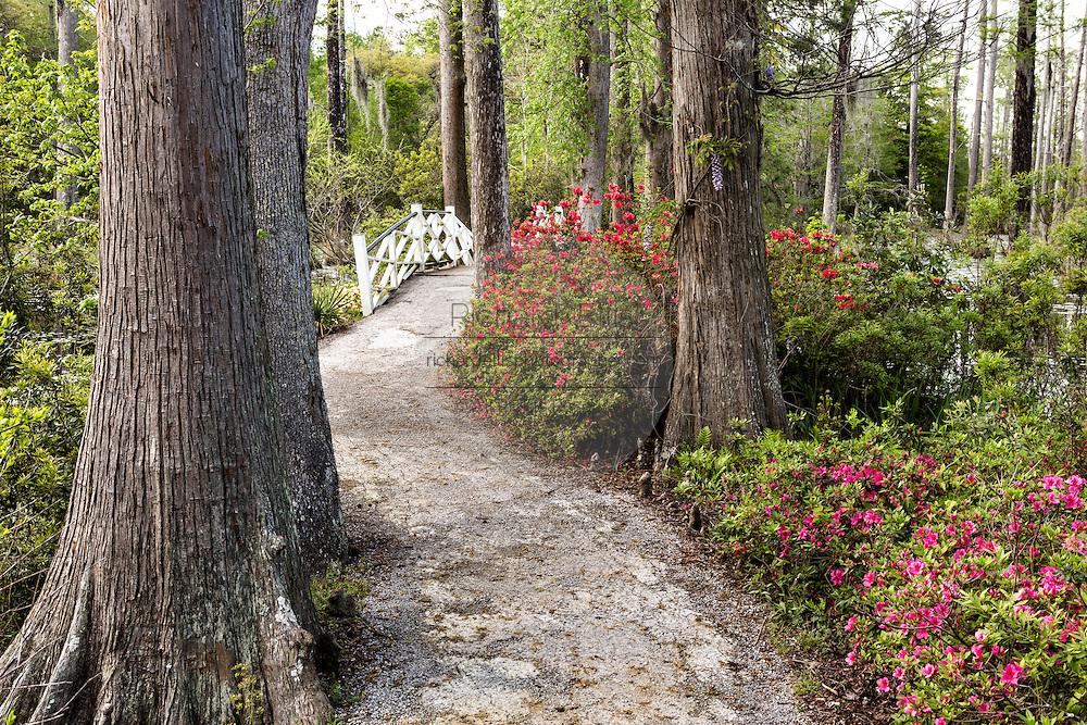 Foot bridge across the blackwater bald cypress and tupelo swamp during spring at Cypress Gardens April 9, 2014 in Moncks Corner, South Carolina.