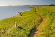 Lady walking dog, Hallock Bay (Long Beach Bay), Orient Long Island, New York