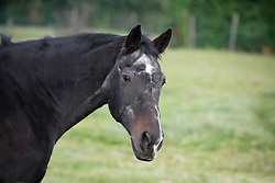 Senior Horse<br /> Fred in de weide - Kieldrecht 2005<br /> Photo© Dirk Caremans