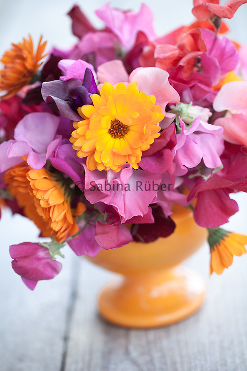 Bright flower arrangement with pink and red sweet peas and Calendula officinalis in orange vase