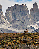 Guanaco on a Ridge at Torres del Paine National Park in Chile. Image taken with a Nikon D3x camera and 24-120 mm f/4 lens (ISO 100, 120 mm, f/9, 1/250 sec).