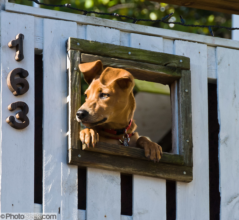 A brown dog peers through a window in a white fence at Harpers Ferry, West Virginia, USA. Harpers Ferry is a historic town in Jefferson County, West Virginia, one of the few towns directly traversed by the Appalachian Trail. The town contains both Harpers Ferry National Historical Park and the populated Harpers Ferry Historic District (higher above the flood plain), at the confluence of the Potomac and Shenandoah Rivers where the US states of Maryland, Virginia, and West Virginia meet. Historically, Harpers Ferry is best known for John Brown's raid on the Armory in 1859 and its role in the American Civil War.
