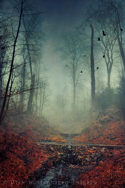 Creek running through a misty forest - textured photograph