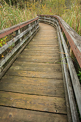 United States, Washington, Kirkland, boardwalk at Totem Lake