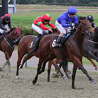 Lingfield 20th August