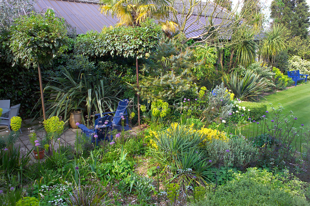 Borders immediately in front of the Clock House. Blue New England chairs on patio amongst borders. Planting includes Pittosporum tobira, Phormium, Trachycarpus fortunei, Euphorbia subsp. charcias wulfenii (Spurge), Yucca, Mahonia, Allium stipitatum & Stachys. Denmans Garden, Chichester, West Sussex. Design by John Brookes