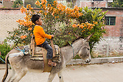 A young Mexican boy rides a donkey in the village of Teotitlan de Valle in the Oaxaca Valley, Mexico.
