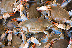 Washington DC; USA: Blue crabs from the Chesapeake at the Maine Avenue Fish Market.Photo copyright Lee Foster Photo # 26-washdc82747