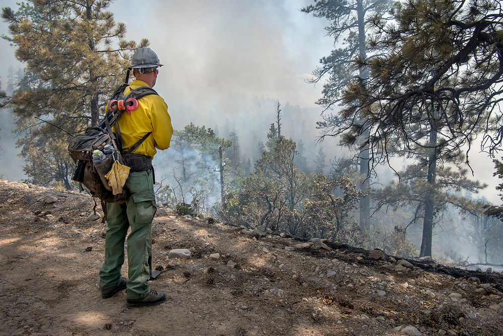 em061517a/jnorth/Kris MacDonald, with a crew from Denver, watches the Bonita Fire as it burns near a line they have cut. The fire has burned around 2000 acres in the Carson National Forest near Vallecitos Canyon Thursday June 15, 2017. (Eddie Moore/Albuquerque Journal)
