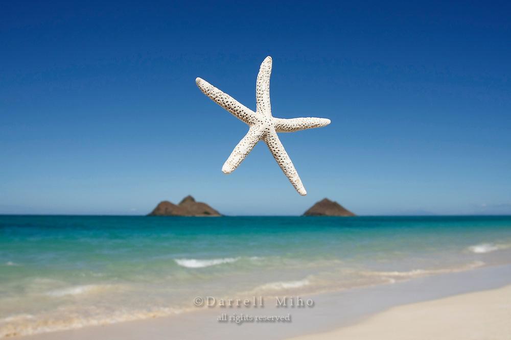 Aug. 19, 2008; Kailua, HI - Starfish and the Mokulua Islands just off the coast from Lanikai Beach. <br /> <br /> Photo credit: Darrell Miho
