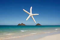 Aug. 19, 2008; Kailua, HI - Starfish and the Mokulua Islands just off the coast from Lanikai Beach. <br /> <br /> Photo credit: Darrell Miho