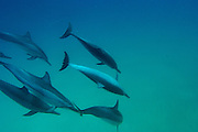 under water photo