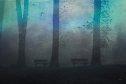 Benches and trees in a park on a foggy morning - texturized photograph