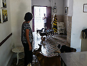 Rescued dogs roam freely about the reception area of Aniplant, Havana, Cuba.