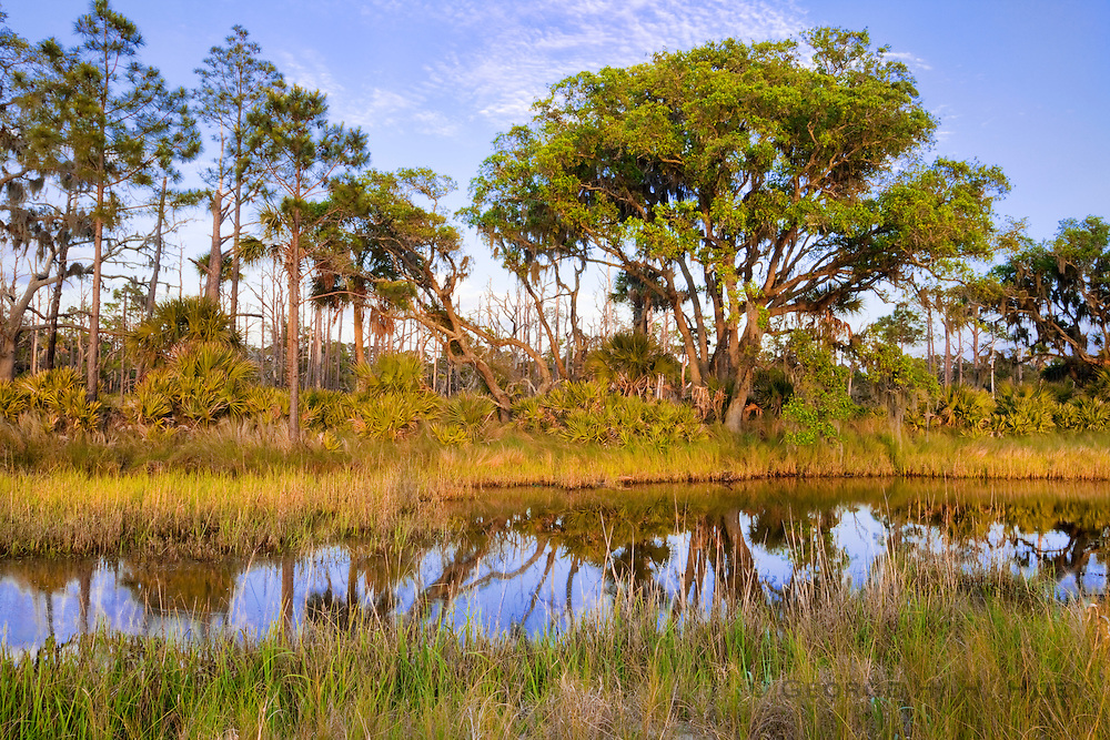 1300-1008 ~ Copyright: George H.H. Huey ~ Salt marsh with Saw palmetto [Serenoa repens] or [Sabal serrulatum] and Sand live oak [Quercus germinata] and long-leaf pine on St. Catherine's Island, Georgia.
