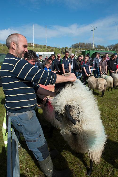 Clare Island Ram Fair &amp; Sheep Dog Trials.<br /> Michael Oliver  with his Blackface lamb ram. Pic: Michael Mc Laughlin. Pic: Michael Mc Laughlin