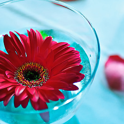 Red floating flower in blue glass vase.