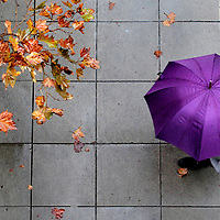 Leaves along Locust Street in downtown Santa Cruz, California turn to autumn colors, as a pedestrian keeps dry with an umbrella during a period of drizzle on Wednesday November 19, 2014.