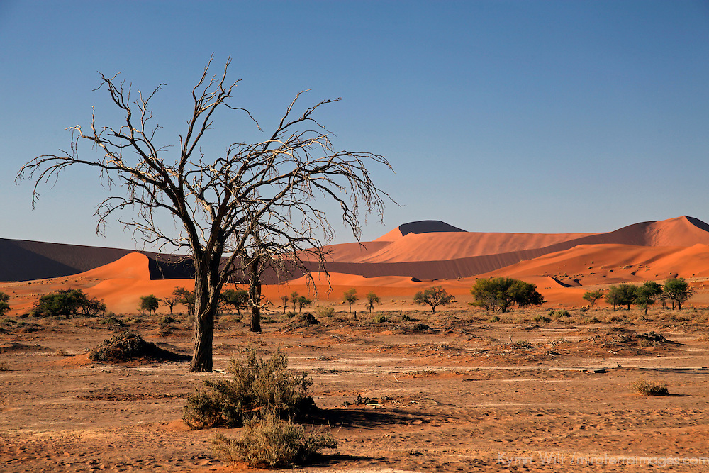 Africa, Namibia, Sossusvlei. Flora landscape of Sossusvlei.