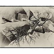Desert Oak - Lensbaby - Sepia Black & White - Artist Designed Custom Border