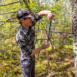 A forestry grad student (Cameron McIntire) takes a core sample from a black gum tree (tupelo), Nyssa sylvatica. The core will be examined under a microscope to estimate the age of the tree. Barrington, NH.