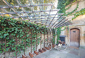 Bike Stand, Old Parsonage Hotel by James Wyman Architects