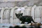 Phnom Penh, Cambodia. Little cat.